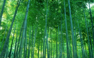 bamboo_forest-1