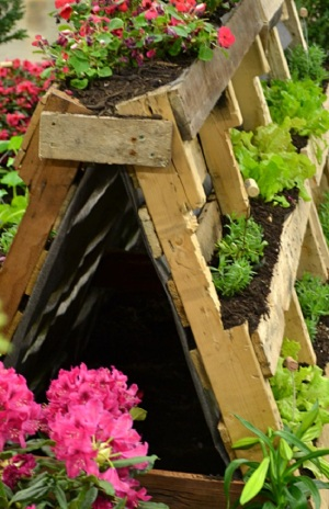 pallets-as-vegetable-garden